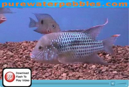 Aquarium Gravel width=
